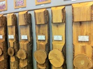 나무를 나이테가 보이도록 횡방향으로 자른 단면 샘플